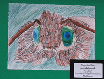 Magnified Bee, by Jenny, grade 5
