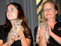 Jack Hanna's wildlife program at Auraria on Aug. 22 included Siberian lynx.