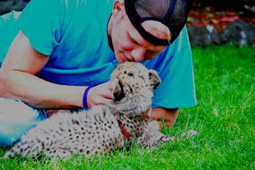 CU Denver student Bradley Larson works with cheetahs as part of an internship