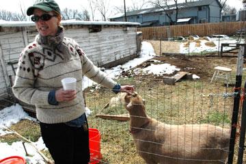 CU Denver instructor Amanda Weaver pets a goat at Five Fridges Farm in Wheat Ridge