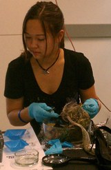 Ecology students study leaf packs
