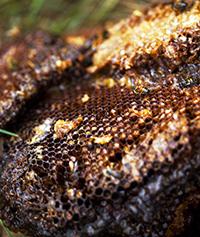 Honeycomb, Five Fridges Farm