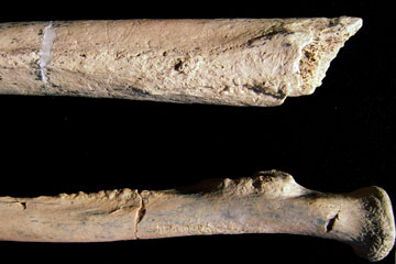 Bone fragments found in Tanzania by CU Denver Professor Charles Musiba and his team