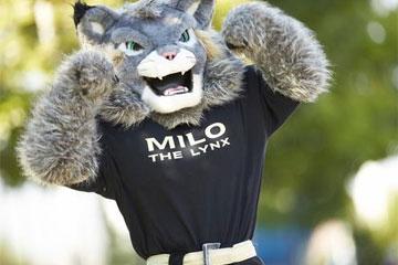 Milo the Lynx