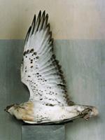 bird specimen