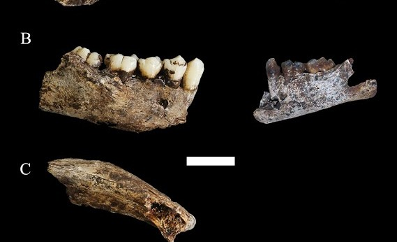 Homo naledi teeth fragments
