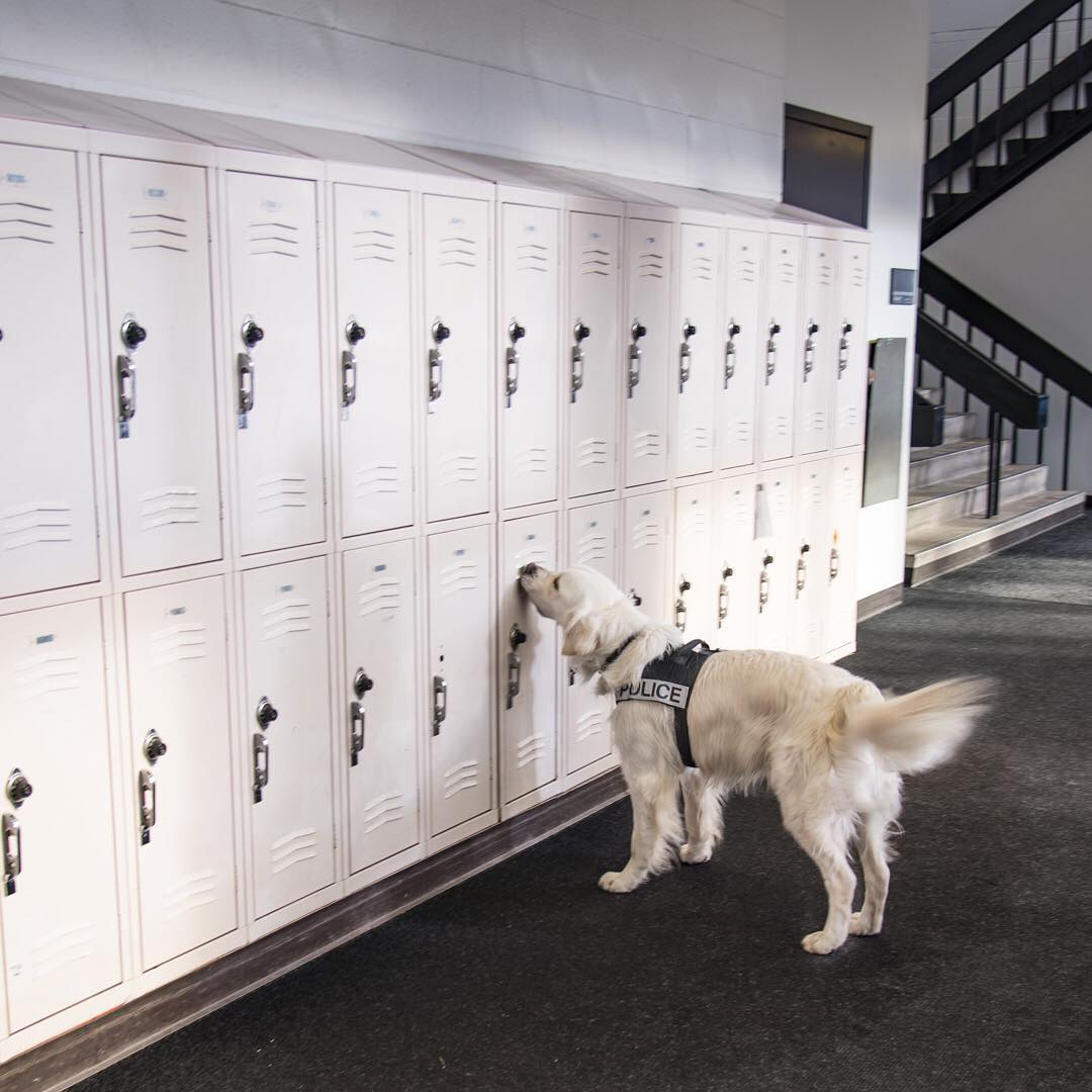 Dash the crime-fighting dog
