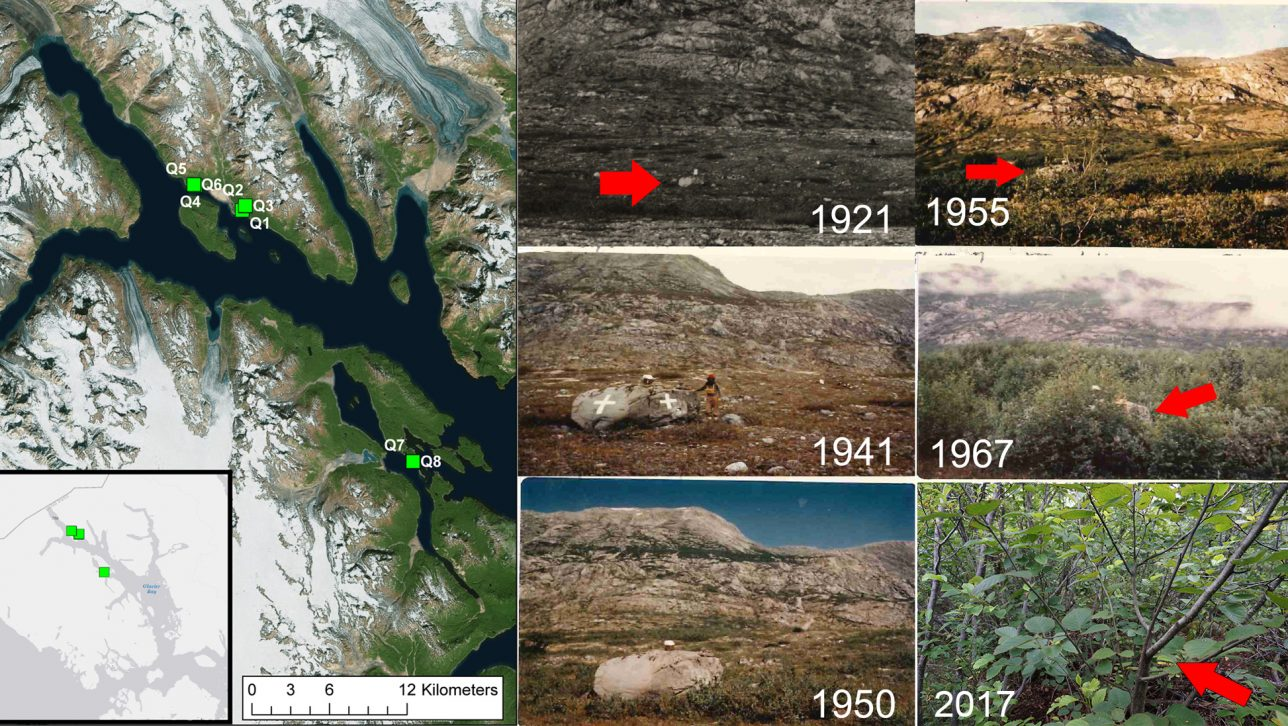 Collage of photos taken from 1921 to 2017 showing a large boulder gradually getting covered by surrounding plant growth.
