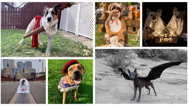 dogs in halloween costumes collage