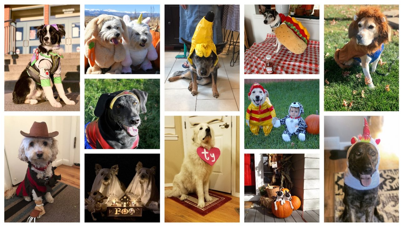 collage of dogs in Halloween costumes