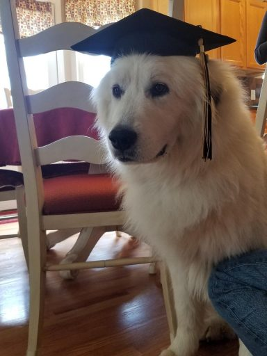 Dog wearing a commencement cap
