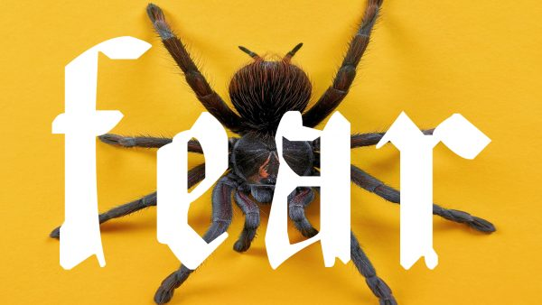 Graphic illustration of the word Fear, spider