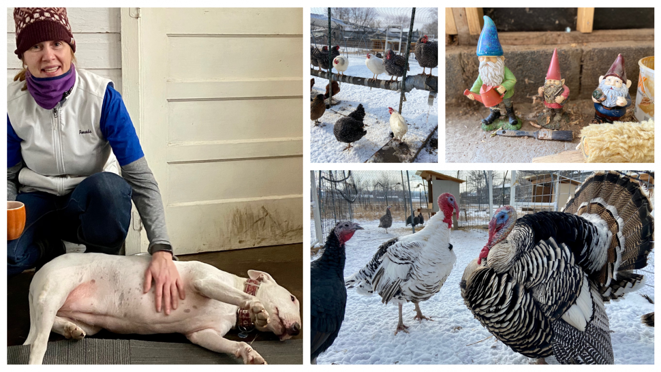photo of turkeys, chickens, and Weaver with her dog Eva