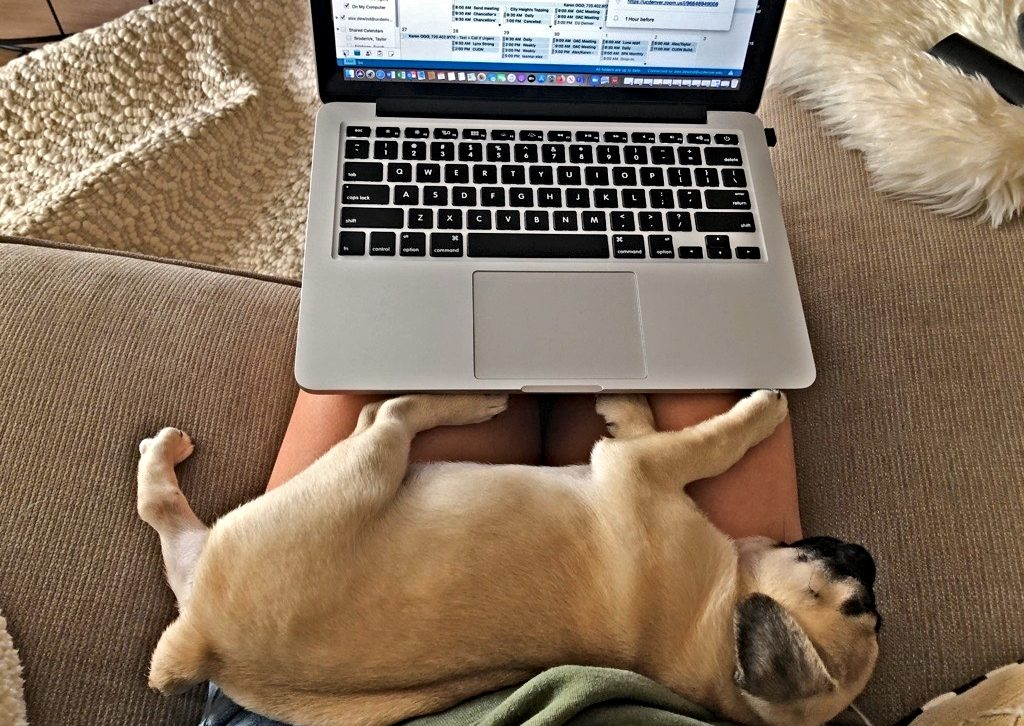 puppy next to laptop